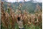 Nicaragua Se considero la sequia mas severa de los ultimos 30 anos y afecto fuertemente a 100 mil familias Para los proximos anos se espera un incremento en la temperatura de 3 grados centigrados a 4 g